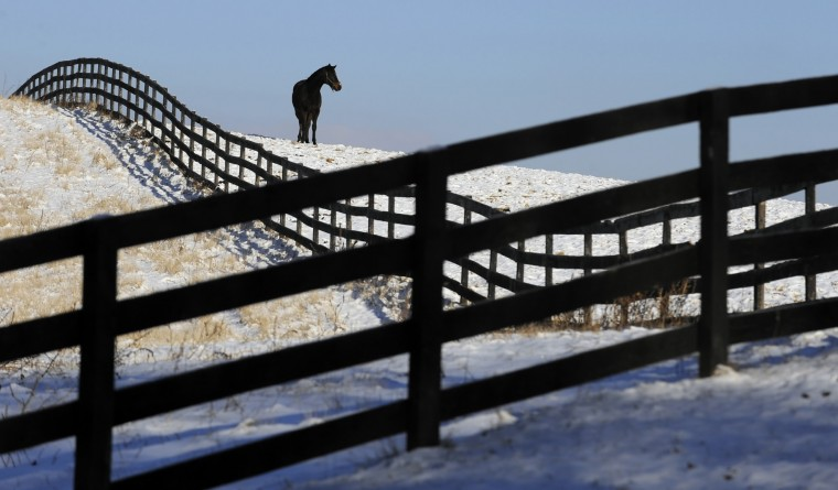 2011: Alden's Malibu, a horse at Country Life Farm in Bel Air, stands out in the snow covered field. (Lloyd Fox/Baltimore Sun)