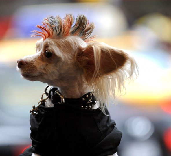 "Tuffy dressed as a ""Skeleton "" during the Fifth Annual Times Square Dog Day Masquerade October 18, 2009. (Timothy A. Clary/AFP Photo/Getty Images)"