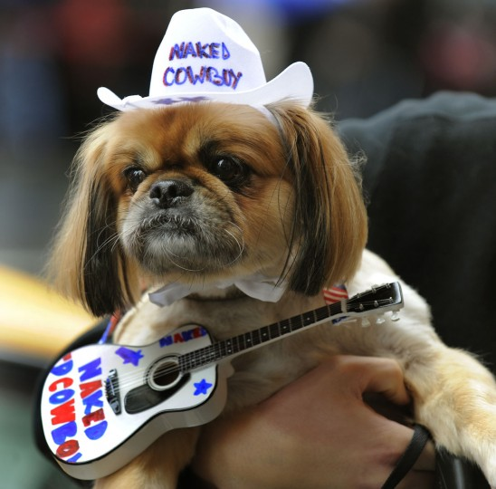 "Georgie the Pekingese dressed as a ""The Naked Cowboy"" during the Fifth Annual Times Square Dog Day Masquerade on October 18, 2009. (Timothy A. Clary/AFP Photo/Getty Images)"