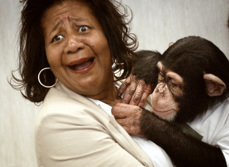 In August 2006, Mikey, a chimpanzee from Elkton, took a particular interest in Ann Clark who was not sure what to do with the 4-year-old chimpanzee. Mikey, who has appeared on the cover of Black Eyed Peas CDs, was visiting a local radio station. (Jed Kirschbaum/Baltimore Sun)