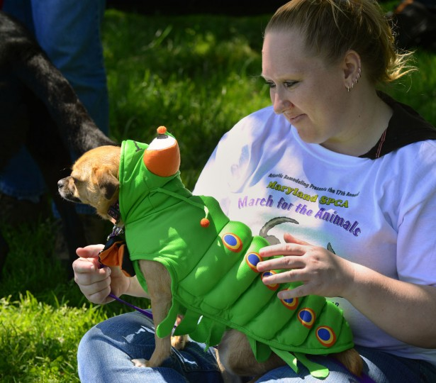 Kelly Pfisterer has her three-year-old mix, Lucy dressed up as a caterpillar as the Maryland SPCA holds their 17th annual March for the Animals around the lake in Druid Hill Park Sunday afternoon. (Doug Kapustin/Baltimore Sun)