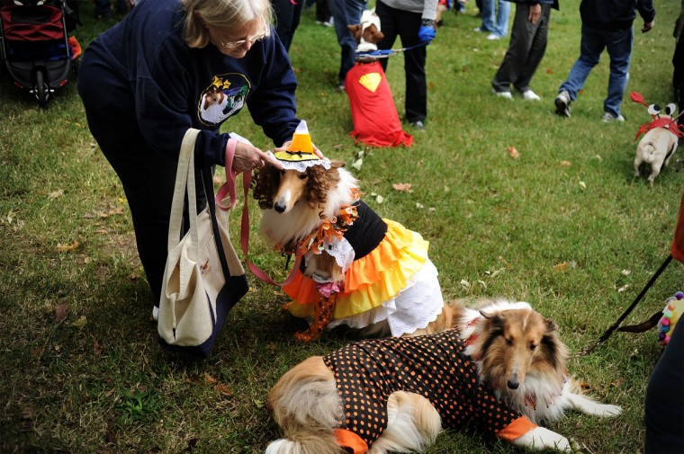 Joan Neidhardt (c) of Bel Air, Md., prepares her collie Sydney for the costume contest during the Seventh Annual BARCStoberfest Fundraiser at Patterson Park in Baltimore, Md., Saturday Oct. 22, 2011. The event included pet and people crafts, food vendors, pet contests including pet costume contest. Proceeds benefited the Baltimore Animal Rescue and Care Shelter. (Patrick Smith/Baltimore Sun)