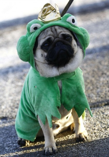 Dog Ben wears a King Frog costume as he attends the traditional Rose Monday street carnival parade in Mainz, February 20, 2012. The Rose Monday parades in Cologne, Mainz and Duesseldorf are the highlight of the German street carnival season. (Kai Pfaffenbach/Reuters)