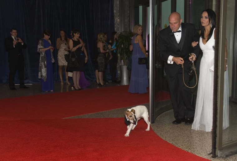 "Uggie the dog, from the movie ""The Artist,"" arrives with trainer Omar Von Muller on the red carpet for the annual White House Correspondents' Association Dinner at the Washington Hilton in Washington April 28, 2012. (Jonathan Ernst/Reuters)"