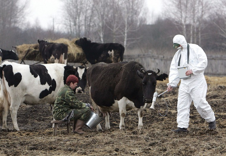 April 6, 2006: A worker of the Belarussian radiation ecology reserve measures the level of radiation at Belarussian village Vorotets, inside the 30-km exclusion zone around the Chernobyl nuclear reactor. The 1986 Chernobyl disaster severely contaminated one quarter of Belarus' territory and tens of thousands of people were evacuated from their homes as radiation from Chernobyl spread throughout the area. (Viktor Drachev/AFP/Getty Images)