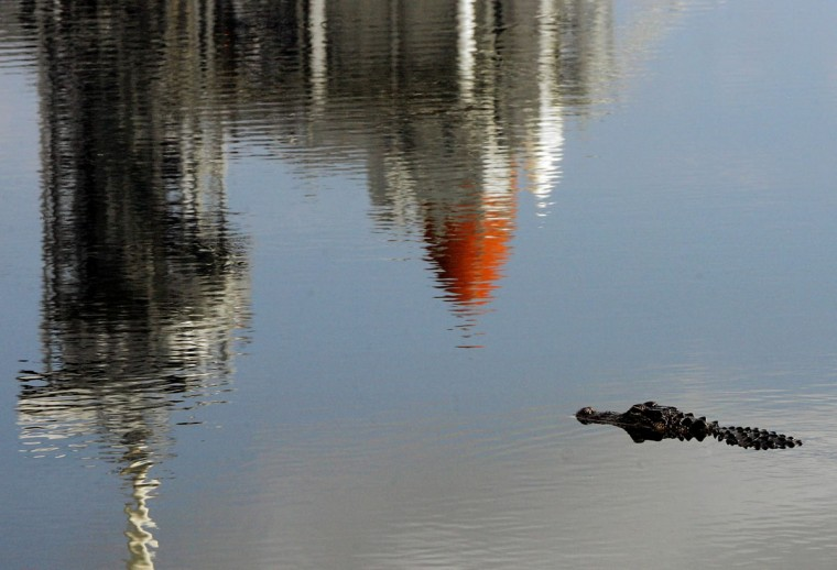 July 14, 2005: An alligator swims in a small pond in front of launch pad 39B as the Space Shuttle Discovery is reflected in the water at the Kennedy Space Center in Cape Canaveral, Florida. NASA engineers are searching for the cause of a fuel-sensor malfunction that has kept Discovery from launching - the first shuttle mission since the 2003 Columbia accident. (Win McNamee/Getty Images)