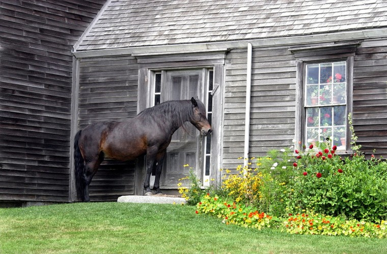 "Horsing Around: ""Waiting"" by Ruth Schaefer -- Ruth photographed a horse waiting at the door of the Olson farmhouse in Cushing, Maine with a Canon Rebel XSi. ""I love the subtle and not-so-subtle humor in this week's winning photo. Ruth found something different to show us with this photo from a famous farmhouse in Maine. Like a big dog, the horse looks like it is expecting to be let inside. The soft light really brings out the texture in the weathered house as well as the horse."""