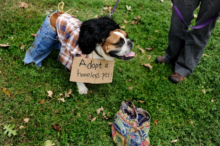 Willy shows off his costume to passerby during the Seventh Annual BARCStoberfest Fundraiser, at Patterson Park in Baltimore, Md., Saturday Oct. 22, 2011. (Patrick Smith/Baltimore Sun)