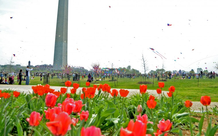 The Kite Festival was not the only draw to the National Mall Saturday, as flowers and cherry blossoms have begun to bloom. (Jon Sham/Patuxent Homestead)