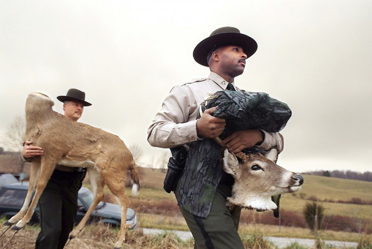In 1997, the Department of Natural Resources police use a remote controlled deer in no hunting areas to catch poachers and deer hunting violators. They are called decoy deer and consist of deer skin over styrofoam. Cpl Paul Hanyok carries the body of the decoy and Officer Aaron Parker carries the head. (Jed Kirschbaum/Baltimore Sun)