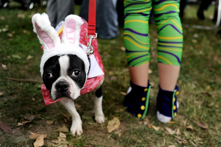 Chewie stands close to her owner as they prepare to take stage for the costume contest during the Seventh Annual BARCStoberfest Fundraiser at Patterson Park in Baltimore, MD. on Saturday, October 22, 2011. Proceeds benefited the Baltimore Animal Rescue and Care Shelter. (Patrick Smith/Baltimore Sun)
