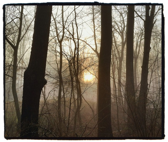 This photograph was shot in my backyard through some trees as the sun was burning away the morning fog. (Robert K. Hamilton/Baltimore Sun)