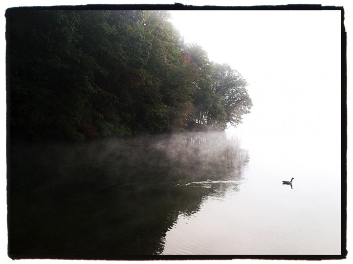 A goose swims along the shore line at Liberty Reservoir in Baltimore County. This picture was shot just around sunrise on a foggy day. Whether you are shooting with a regular camera or a camera phone, you need to venture out when the light is most interesting. (Robert K. Hamilton/Baltimore Sun)