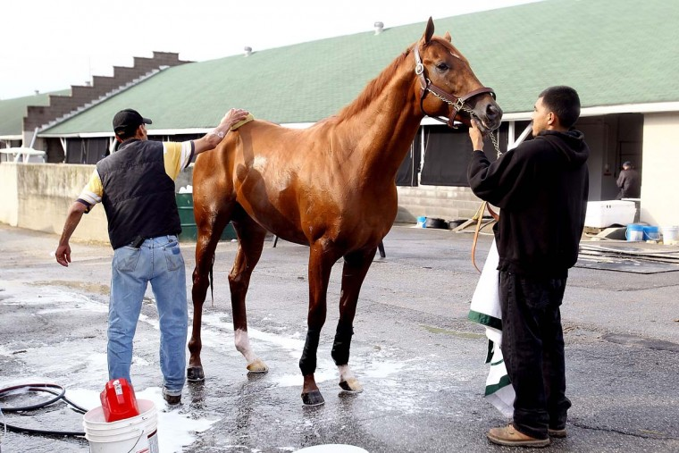 I'll Have Another, held by Cesar Atilano and groomed by Inocancio Diaz Tapia, is bathed after the morning exercise session in preparation for the 138th Kentucky Derby at Churchill Downs on April 29, 2012. (Matthew Stockman/Getty Images)