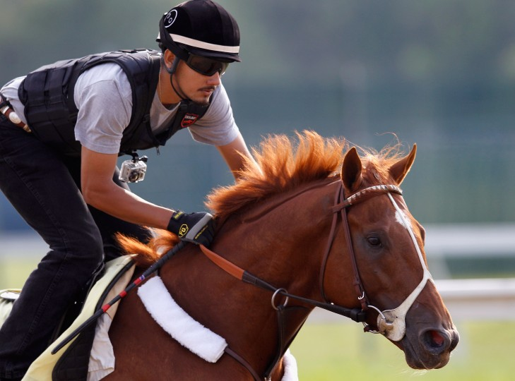 Exercise rider Jonny Garcia takes I'll Have Another over the track in preparation for the 137th Preakness Stakes at Pimlico Race Course on May 16, 2012 in Baltimore, Maryland. (Getty Images)