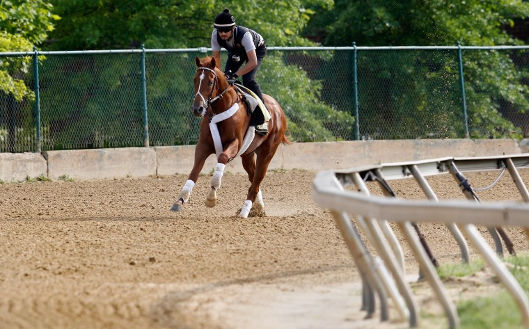 Exercise rider Jonny Garcia takes I'll Have Another over the track in preparation for the 137th Preakness Stakes at Pimlico Race Course on May 16, 2012 in Baltimore, Maryland. (Rob Carr/Getty Images)