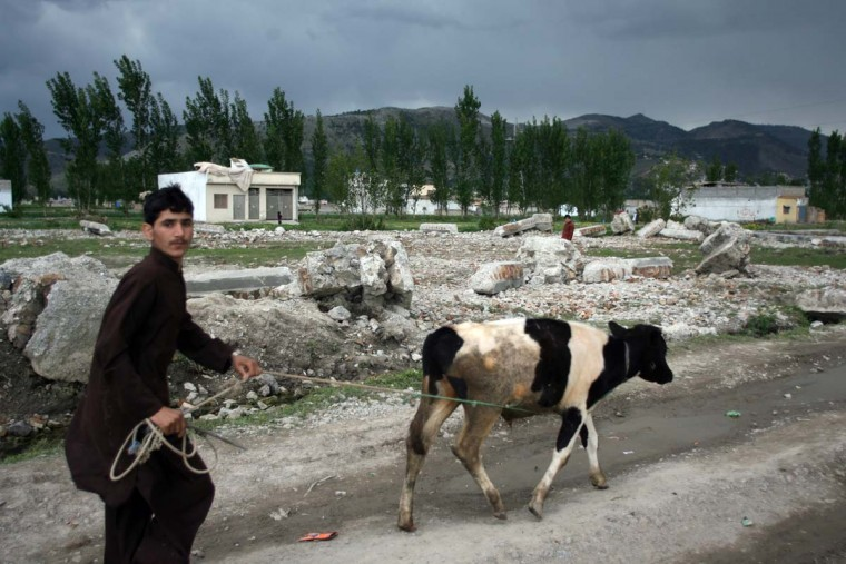 A local resident walks along with his cow beside the rubble of the demolished compound of slain al-Qaida leader Osama bin Laden in northern Abbottabad on May 1, 2012. (Sajjad Qayyumsa/AFP/Getty Images)