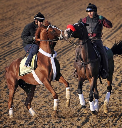 Exercise rider Johnny Garcia controls Kentucky Derby winner I'll Have Another (left) as Sabas Rivera, assistant trainer, on Lava Man, lends a hand as they leave the track after a workout Friday morning at Pimlico Race Course in preparation for the 137th Preakness Stakes on Saturday. (Kim Hairston/Baltimore Sun)