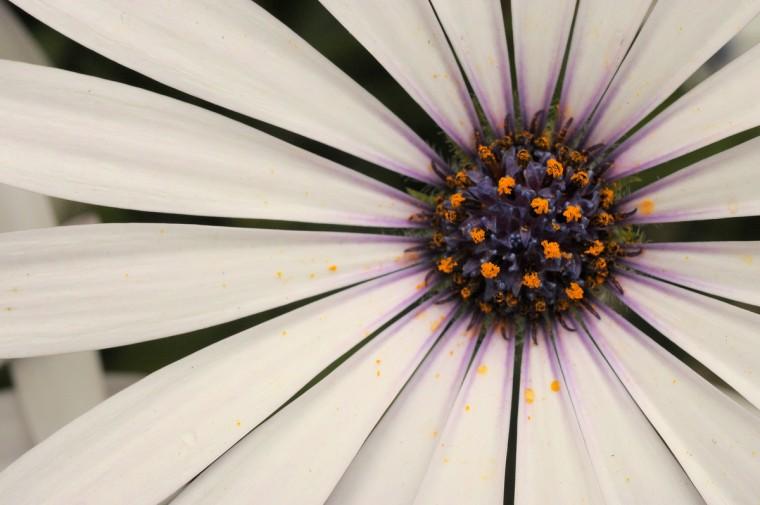 One of the many flowers seen in full bloom at Baltimore's FlowerMart 2012. (Karl Merton Ferron / Baltimore Sun Staff)