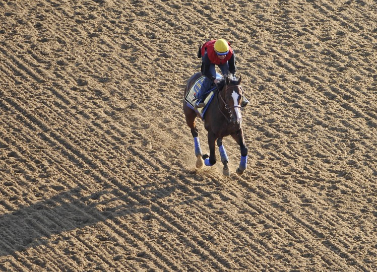 Bodemeister works out with George Alvarez Friday morning on the track at Pimlico Race Course. (Kim Hairston/Baltimore Sun)