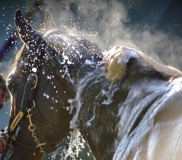 Steam rises from Bodemeister as he is bathed Friday morning after a workout at Pimlico Race Course in preparation for the Preakness Stakes. (Kim Hairston/Baltimore Sun)