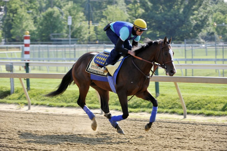 Exercise rider George Alvarez takes Bodemeister on a morning workout at Pimlico Thursday. (Kim Hairston/Baltimore Sun)