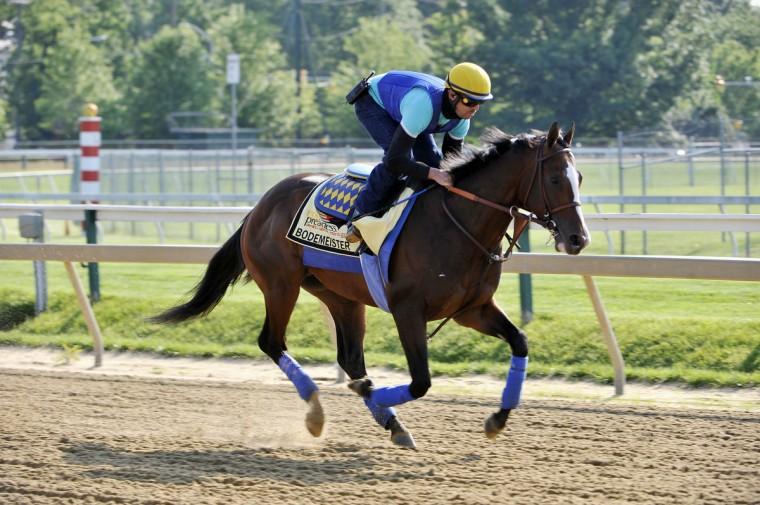 Exercise rider George Alvarez takes Bodemeister on a morning workout at Pimlico Thursday. (Kim Hairston/Baltimore Sun)