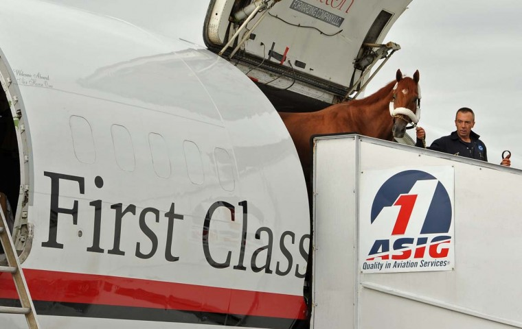 Derby winner I'll Have Another is led off the Equine Transport plane to a horse van to be taken to Pimlico racetrack. (Amy Davis/Baltimore Sun)