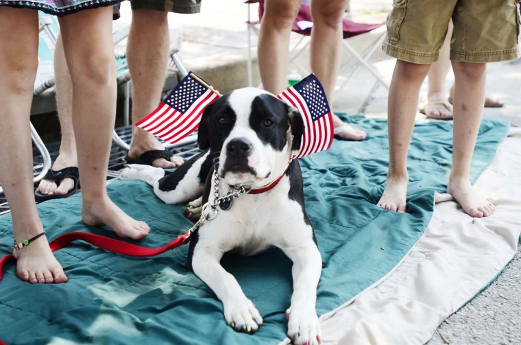"""Ipo, which means """"sweetheart"""" in Hawaiian, sits amid the Blair family during the Memorial Day Parade in Westminster on Monday, May 28th. (Noah Scialom)"""