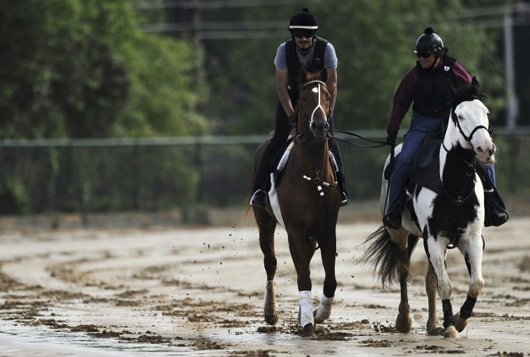Kentucky Derby winner I'll Have Another is walked by exercise rider Johnny Garcia (L), next to lead pony Blue ridden by Sharon Greenberg, at Pimlico Race Course in Baltimore, Maryland May 9, 2012. (Patrick Smith/Reuters)