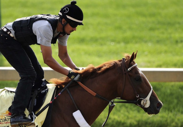 Kentucky Derby winner I'll Have Another is worked out by exercise rider Johnny Garcia at Pimlico Race Course in Baltimore, Maryland, May 16, 2012. (Patrick Smith/Reuters)