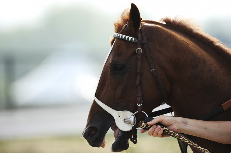 Kentucky Derby winner I'll Have Another is guided off the tracking after a morning walk at Pimlico Race Course in Baltimore, Maryland, May 9, 2012. (Patrick Smith/Reuters)