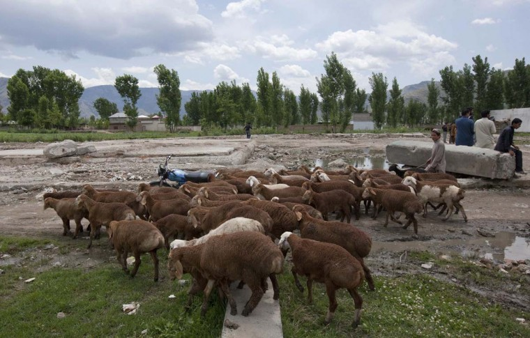 A boy guides his sheep past the demolished site of Osama bin Laden's compound in Abbottabad May 1, 2012. (Mian Khursheed/Reuters)
