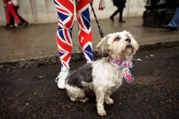 A dog dressed in a Union Jack necktie for the occassion on June 3, 2012 in London, England. (Matthew Lloyd/Getty Images)
