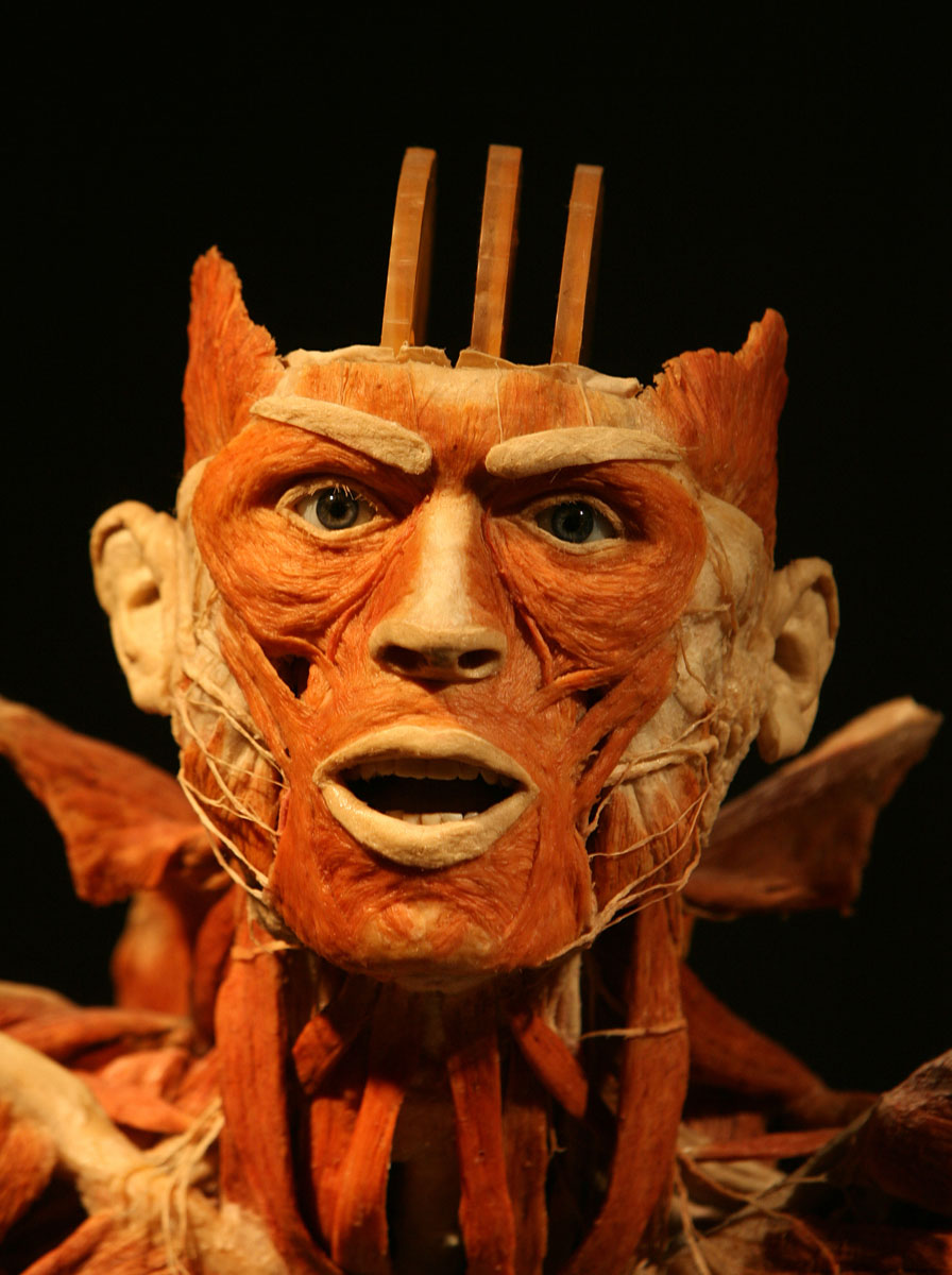 "April 1, 2008: The head of a plastinated hurdler at the ""Body Worlds"" exhibit, the anatomical exhibition of real human bodies by German Gunther von Hagens, known as ""The Plastinator,"" at the California Science Center in Los Angeles, California. (GABRIEL BOUYS/AFP/Getty Images)"