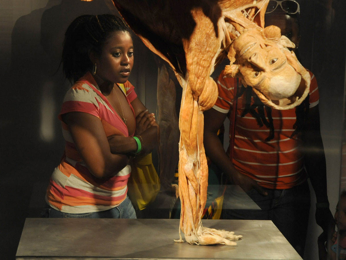 "June 5, 2008: Visitors look at a plastinated body standing on one arm on display in the ""Body Worlds 2"" exhibition at the Maryland Science Center in Baltimore, Maryland. (Doug Kapustin/Baltimore Sun)"