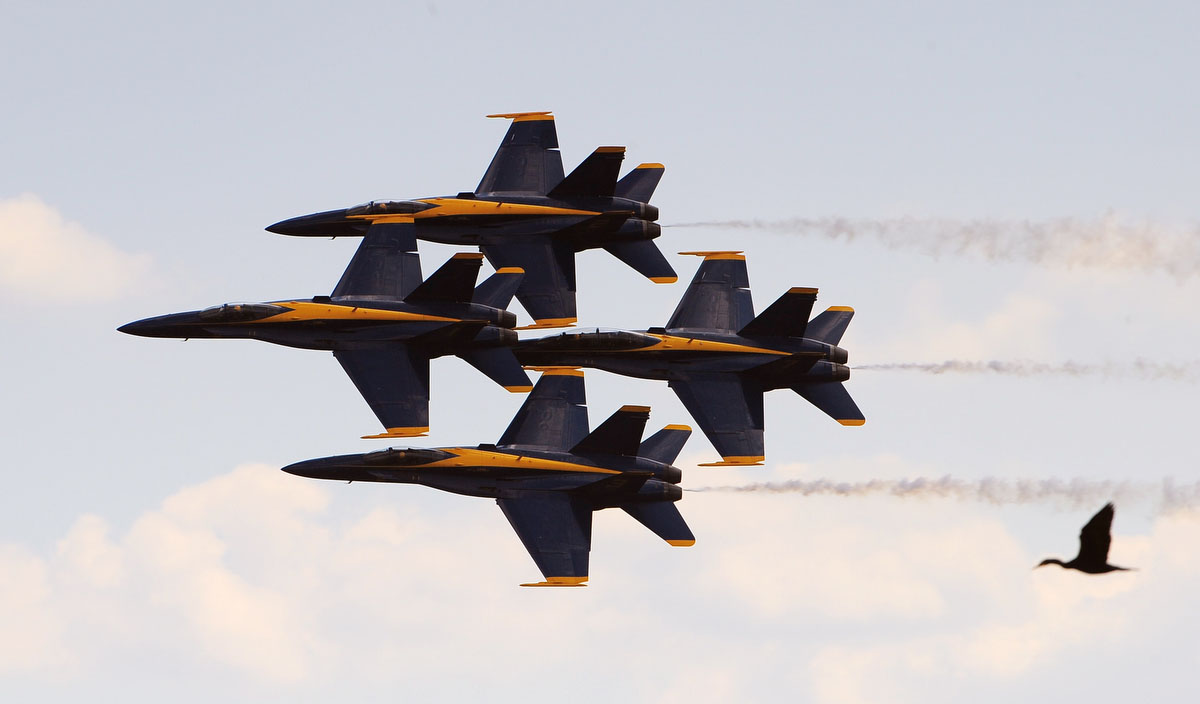 A duck appears to follow the Blue Angels during Friday practice session for this weekend's air show over Fort McHenry in conjunction with Sailabration. (Gene Sweeney Jr./Baltimore Sun)