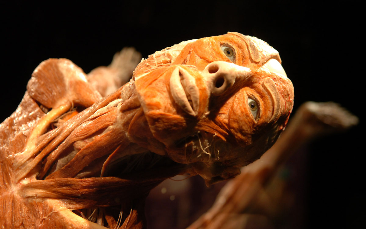 "February 1, 2008: A body takes an out-stretched pose in the ""Body Worlds 2"" exhibition at the Maryland Science Center in Baltimore, Maryland. The exhibit features real human bodies that have been preserved through a process known as plastination. (Glenn Fawcett/Baltimore Sun)"
