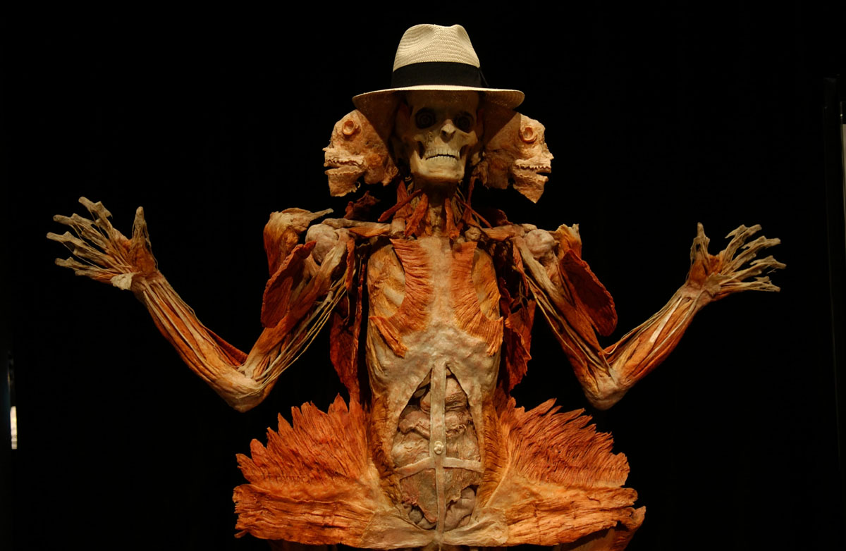 "June 6, 2005: A plastinate specimen at the ""Body Worlds"" exhibit, the show of plastic-infused bodies, while at the Museum of Science and Industry in Chicago, Illinois. (E. Jason Wambsgans/Chicago Tribune)"