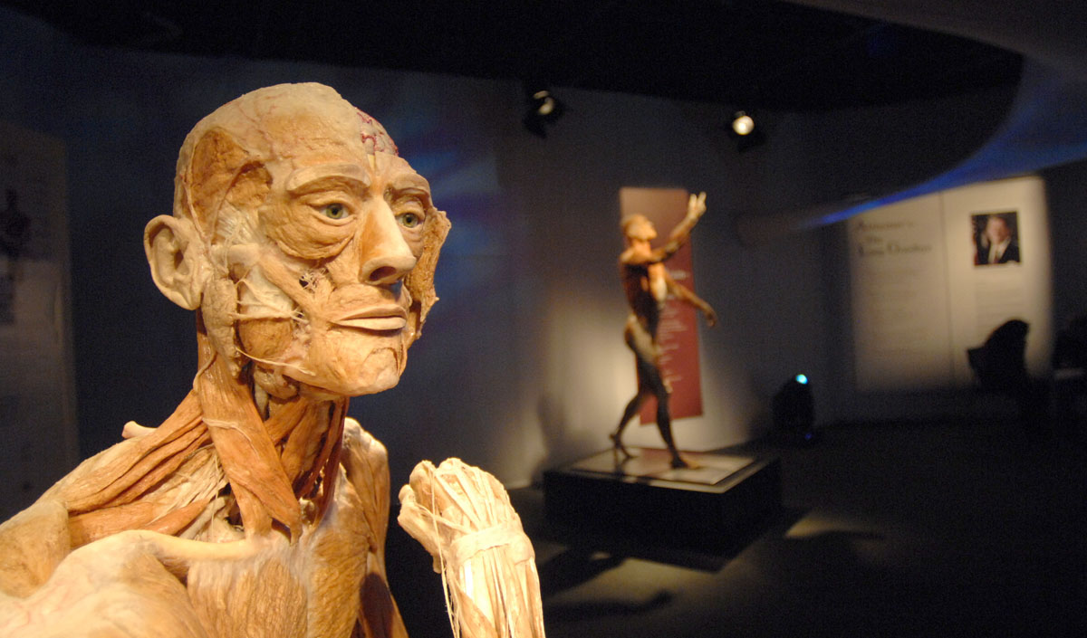 "February 1, 2008: A male body title ""The Ponderer"" sits on display in the ""Body Worlds 2"" exhibition at the Maryland Science Center in Baltimore, Maryland. The exhibit features real human bodies that have been preserved through a process known as plastination. (Glenn Fawcett/Baltimore Sun)"