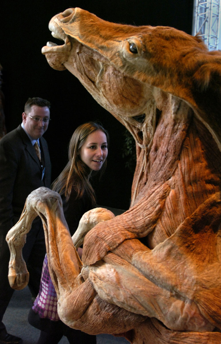 "April 2, 2008: Olympic skater Kimmie Meissner takes a tour of the ""Body Worlds"" 2 exhibit at the Maryland Science Center. (Lloyd Fox/Baltimore Sun)"