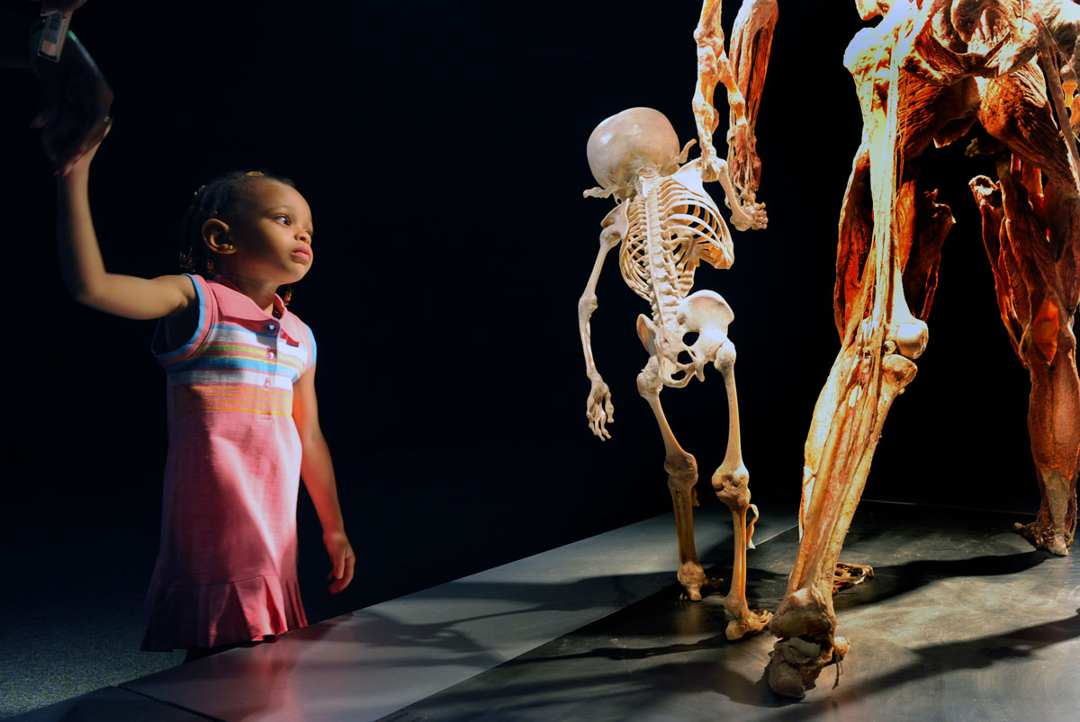 "June 8, 2008: On her trip to the ""Body Worlds 2"" exhibit last Thursday, five-year-old Shian Crandall holds her god-sister's hand while being mesmerized by the skeletal structure of a child also holding hands with an adult specimen. The bodies on display are donated for this purpose and have been transformed and preserved with a process called Plastination. The process halts decomposition and preserves the specimens for scientific and medical education. (Doug Kapustin/Baltimore Sun)"