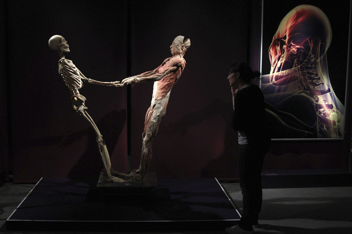 "June 15, 2012: A plastinated human bodies' exhibit is seen during a media viewing for the exhibition ""The Human Body"" in Ostend. The exhibition which runs from June 16 to September 9 showcases dissected real human body specimens that are preserved through an innovative process and respectfully presented, giving visitors the opportunity to view the beauty and complexity of their own organs and systems. (Francois Lenoir/Reuters)"