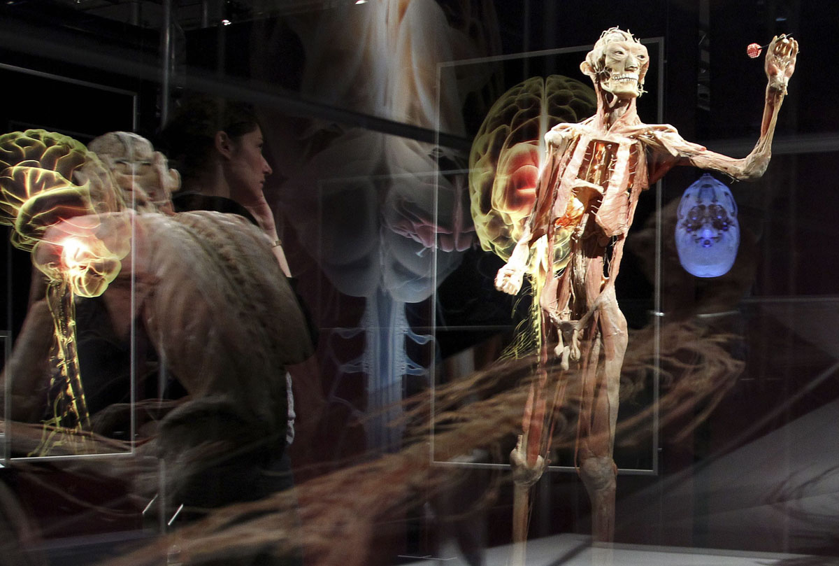 "June 15, 2012: An employee looks at a plastinated human body during a media viewing for the exhibition ""The Human Body"" in Ostend. The exhibition which runs from June 16 to September 9 showcases dissected real human body specimens that are preserved through an innovative process and respectfully presented, giving visitors the opportunity to view the beauty and complexity of their own organs and systems. (Francois Lenoir/Reuters)"