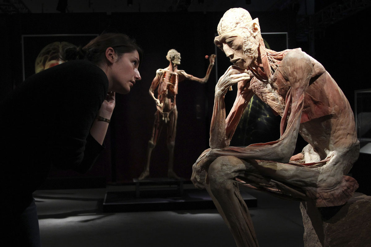 "June 15, 2012: An employee stands next to a plastinated human body during the media viewing for the exhibition ""The Human Body"" in Ostend. The exhibition which runs from June 16 to September 9 showcases dissected real human body specimens that are preserved through an innovative process and respectfully presented, giving visitors the opportunity to view the beauty and complexity of their own organs and systems. (Francois Lenoir/Reuters)"