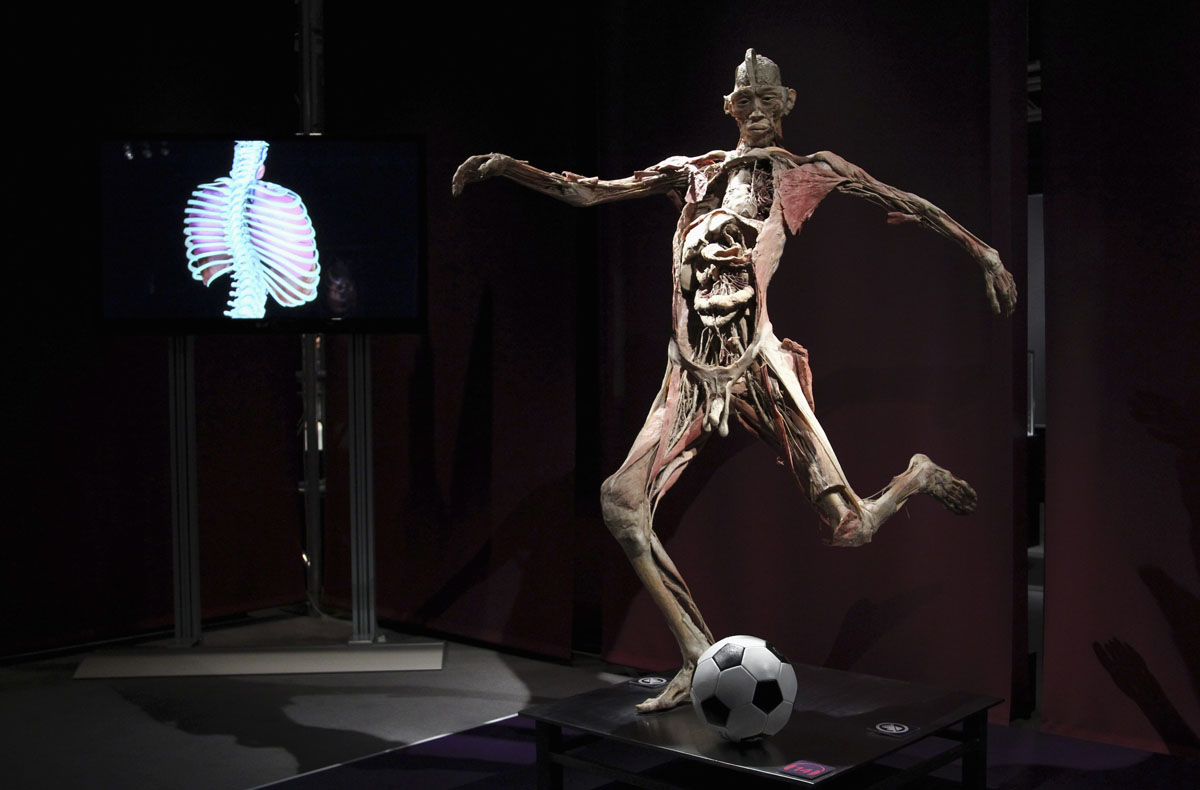 "June 15, 2012: A plastinated human body exhibit with a soccer ball is seen during the media viewing for the exhibition ""The Human Body"" in Ostend. The exhibition which runs from June 16 to September 9 showcases dissected real human body specimens that are preserved through an innovative process and respectfully presented, giving visitors the opportunity to view the beauty and complexity of their own organs and systems. (Francois Lenoir/Reuters)"