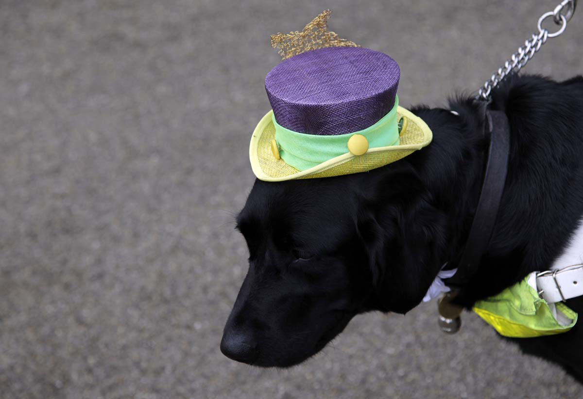 Dog Zoey attends Ladies Day, the third day of racing at the Royal Ascot, southwest of London. (Stefan Wermuth/Reuters Photo)