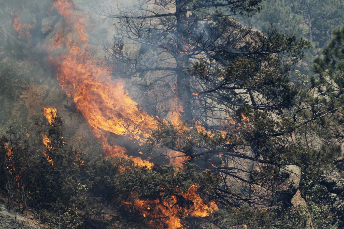 JUNE 26: A tree erupts into flames in the Waldo Canyon fire west of Colorado Springs, Colorado June 26, 2012. (Rick Wilking/Reuters)