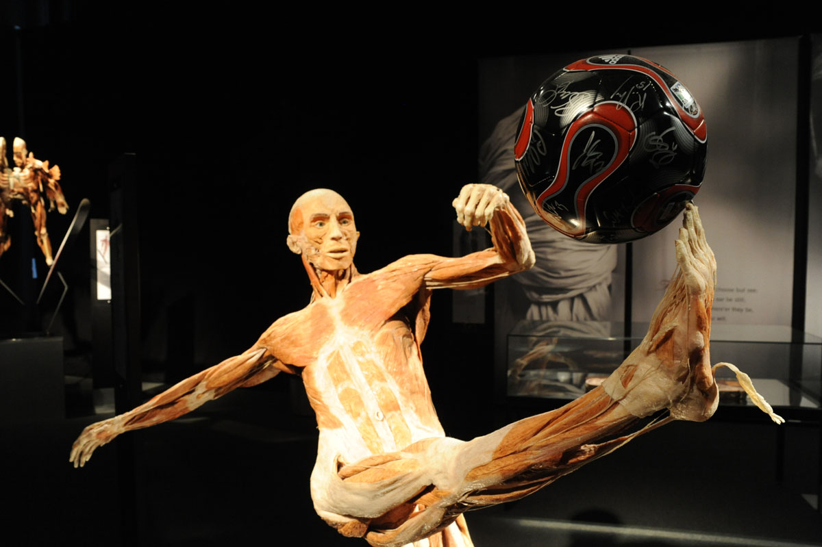 "June 5, 2008: Since its introduction at the Maryland Science Center last year, the traveling ""Body Worlds 2"" exhibit has had unprecedented success there. (Doug Kapustin/Baltimore Sun)"