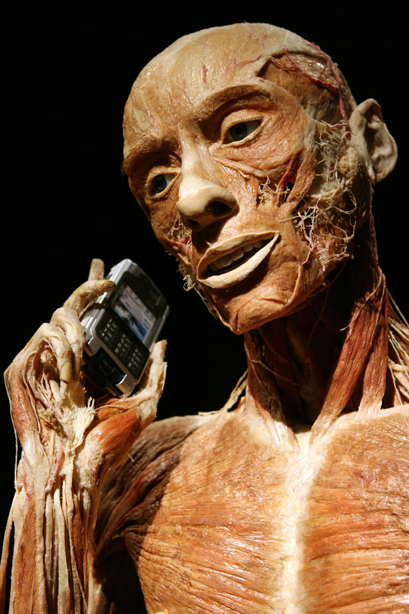 November 16, 2006: A plastified human body specimen speaking on a cell phone is seen on display at the opening of the Plastinarium, run by Bodyworlds artist Gunther von Hagens, in Guben, Germany. Gunther von Hagens, whose exhibitions of human corpses molded into lifelike poses have drawn 20 million visitors worldwide, opens his workshop in the eastern German town of Guben today, spawning hopes of economic revival in a community scarred by years of decline. (Adam Berry/Bloomberg News)